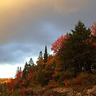 Algonquin Fall by David McMahon