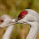 Sandhill Crane 2 by MaluC