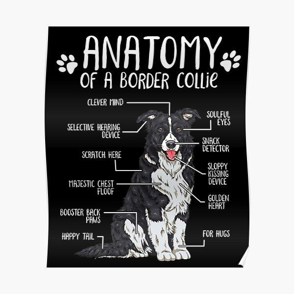Funny Border Collie Anatomy Dog Lover Gift Poster