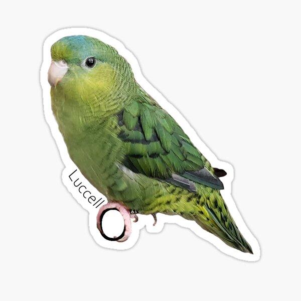 Luccello The Bird (New) Sticker