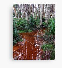 Lachlan Swamp - Centennial Park Canvas Print
