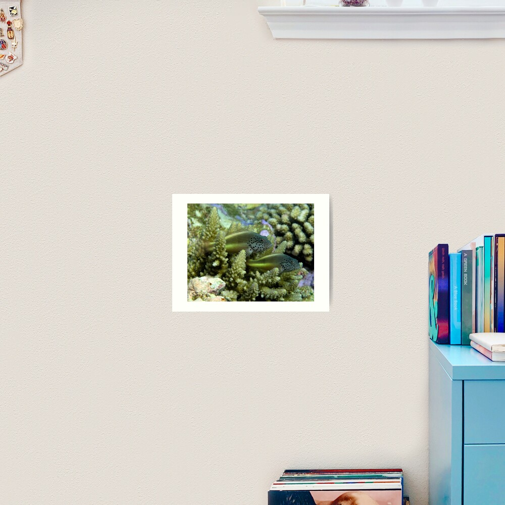 Hawkfish pair Art Print