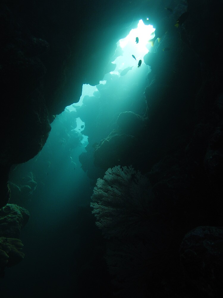 Crevice with Gorgonian by neoniphon