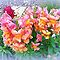 *Snapdragons for Gorgeous Flower Cards Challenge*