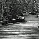 Mangrove Board Walk  by Joy Rensch