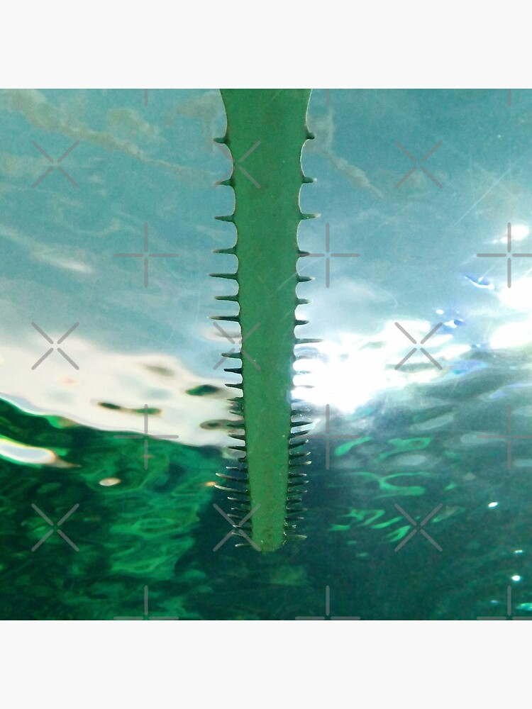 Sawtooth Shark Teeth in Aquarium Water by kpander