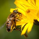 Honey Bee?? by Jodi Turner