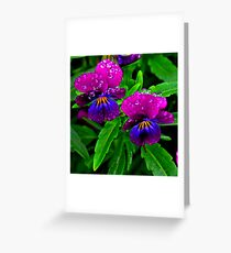 lilla Greeting Card