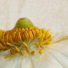 Spring Flower by Margi