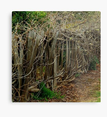 Entwined and Tangled Metal Print