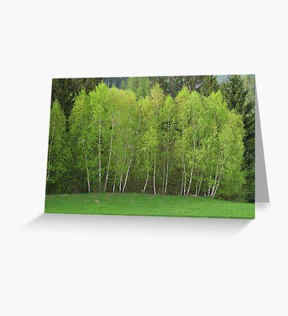 Spring Green - Birch Trees Greeting Card