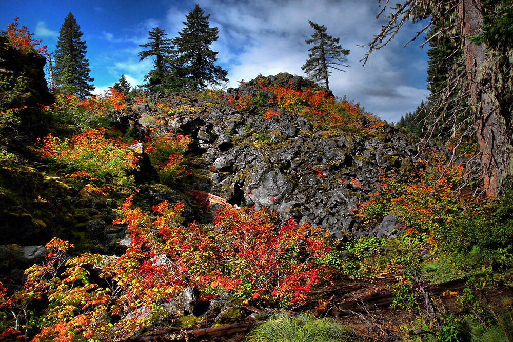You Can't Hide by Charles & Patricia   Harkins ~ Picture Oregon