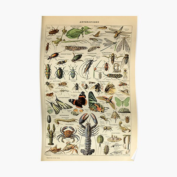 Adolphe Millot Arthropodes Insect Poster