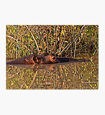 Hippo Reflections Photographic Print