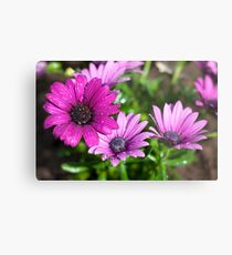 Dropplets on purple flowers Metal Print