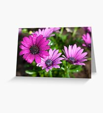Dropplets on purple flowers Greeting Card