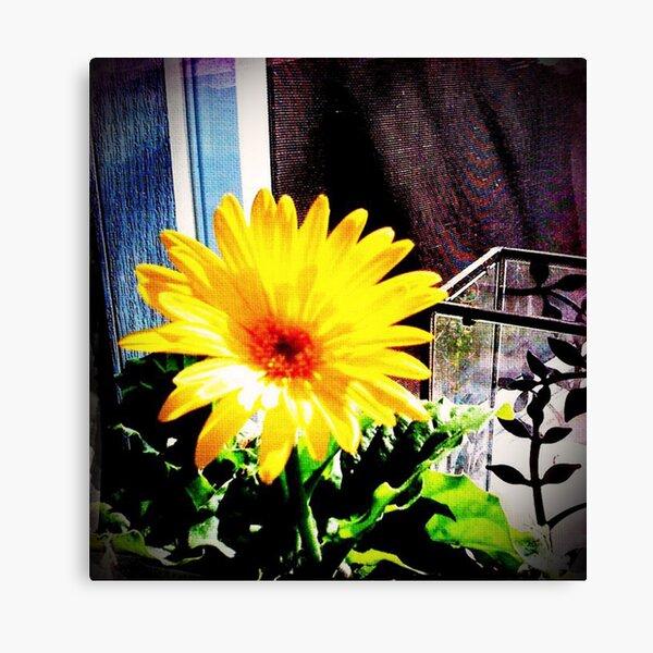 """Sun Drop"" Canvas Print"