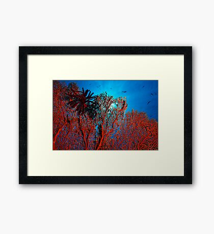 The Coral Framed Print