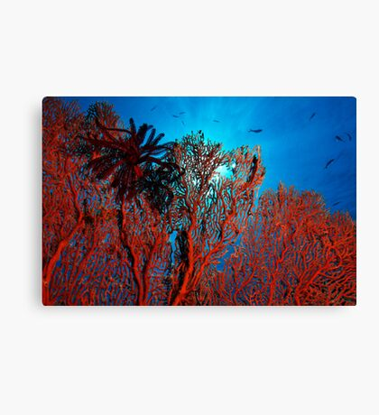 The Coral Canvas Print