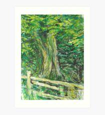 Walk in the Woods Art Print