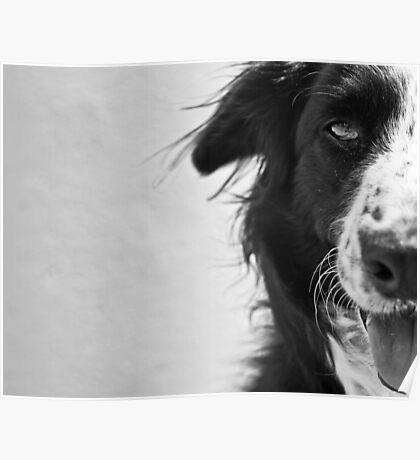 Half the dog Poster