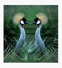 Just one Kiss & we could become One! Photographic Print