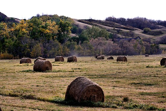 Fall In the Qu' Appelle Valley by Leslie van de Ligt