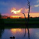 Twilight,Campaspe River,Elmore Victoria by Joe Mortelliti