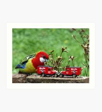Eastern Rosella plays with his cars Art Print
