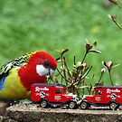 Eastern Rosella plays with his cars by Bev Pascoe