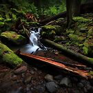 Ramona Creek I by Tula Top