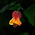 Botanic Bell by AlMiller
