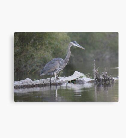 Blue Heron on the Milwaukee River Metal Print
