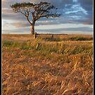 Tree by Jonny Andrews