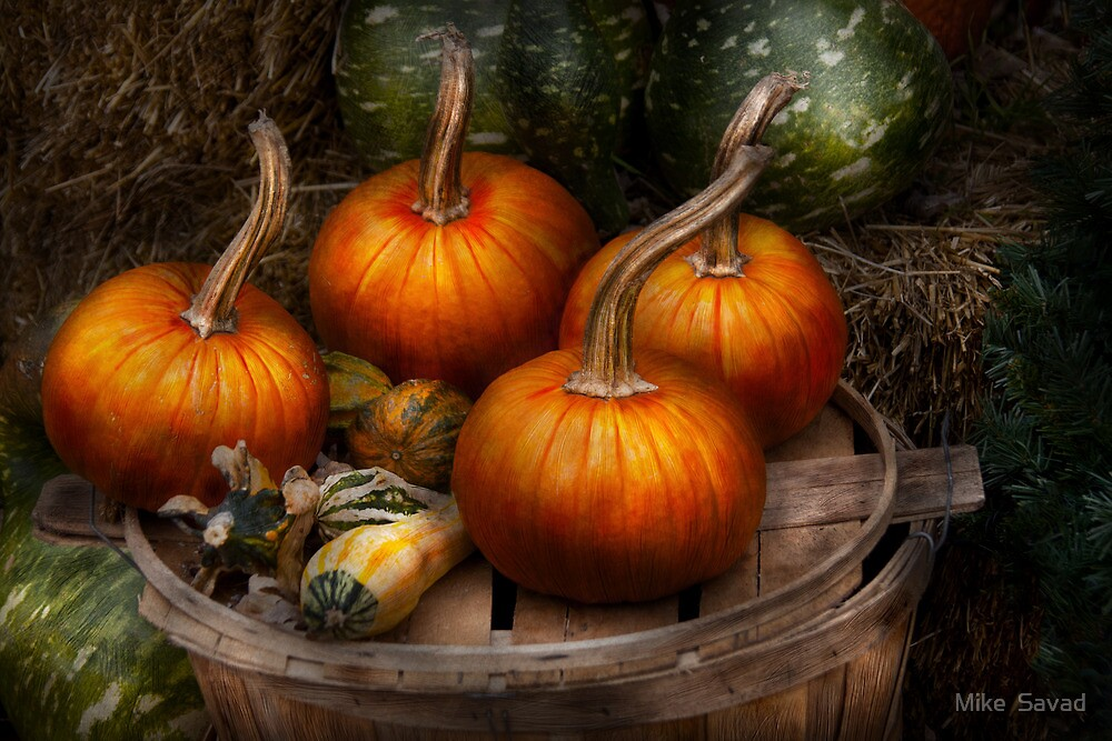 Autumn - Gourd - Pumpkins and some other things  by Michael Savad