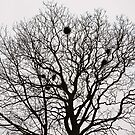 Tree and nests by James  Kerr