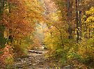 Creekbed At Beavers Bend by Carolyn  Fletcher