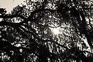 Dreaming Under an Oak Tree by ValeriesGallery