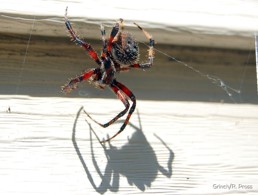 Not so itsy bitsy Spider by Grinch/R. Pross