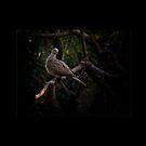 Dove by RAY AGIUS