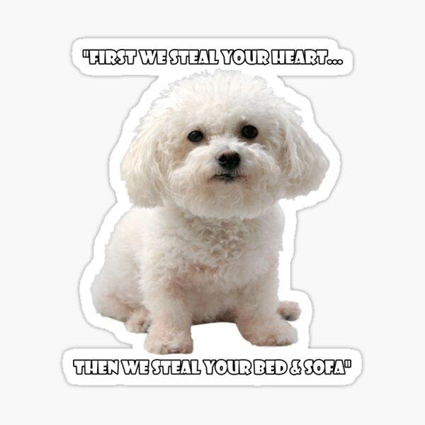 Funny Bichon Frise Lover Sticker