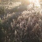 Frosty Meadow at Sunrise. by Christopher Clark