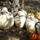 Ghost Pumpkins! by Stephen D. Miller
