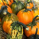 Longhorn Pumpkins by Stephen D. Miller