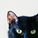 Black Cat Green Eyes by Glennis  Siverson