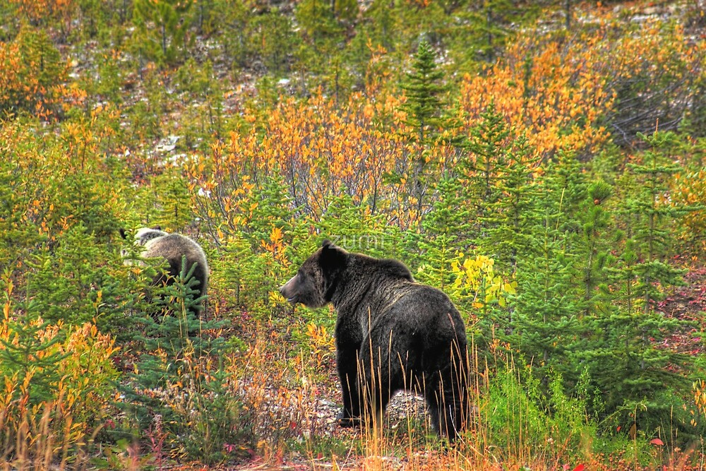 Mother bear and her cub by zumi
