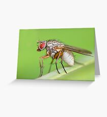 Fly Resting On Leaf Greeting Card