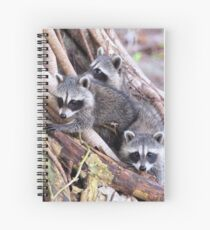 Baby Raccoons Spiral Notebook