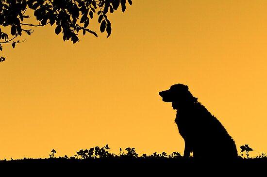Silhouette by Karen Havenaar