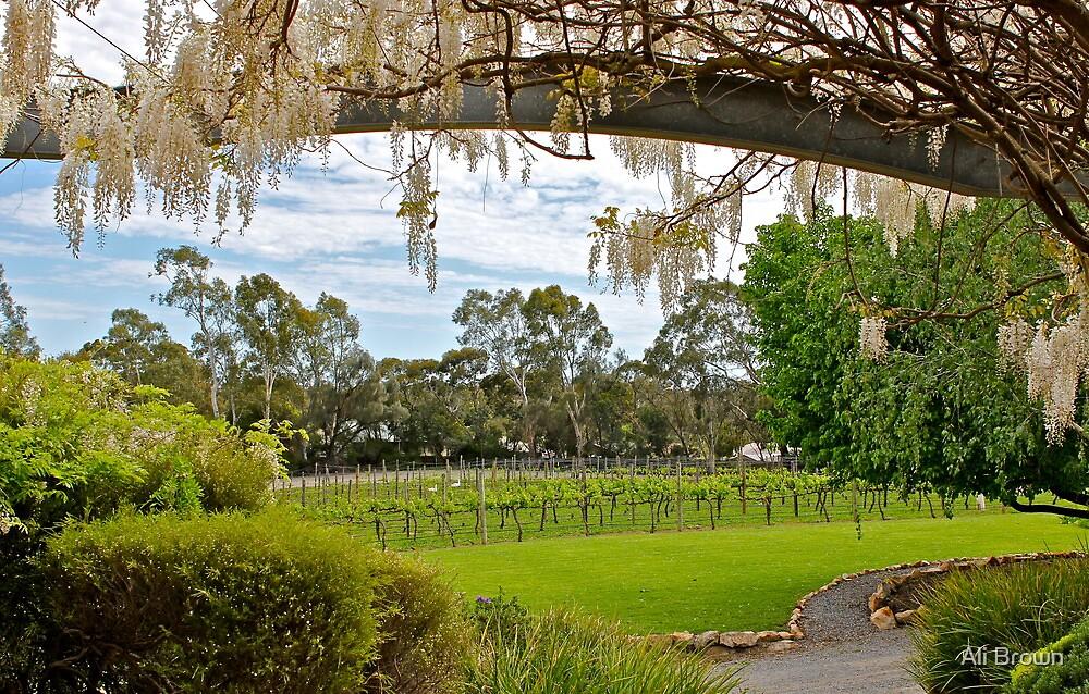 Winery Pleasure... by Ali Brown